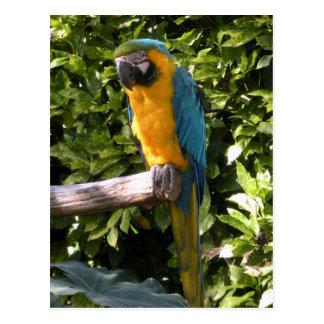 Papagaio no jardim zoológico de Birmingham Cartão Postal