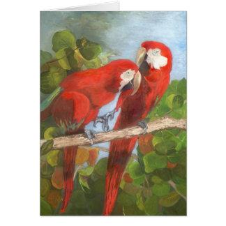 Papagaios que compartilham de segredos cartão