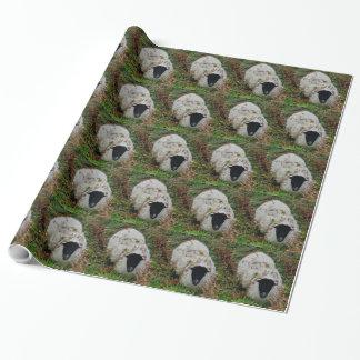 Papel De Presente Carneiros de Dartmoor em esconder