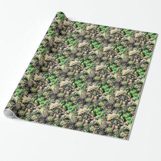 Papel De Presente Succulent Sempervivums - rosa & verde