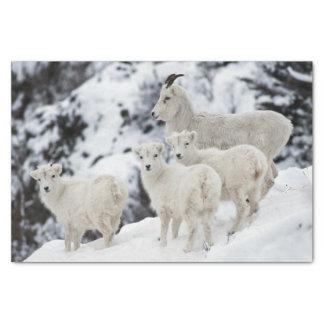 Papel De Seda Família feliz dos carneiros
