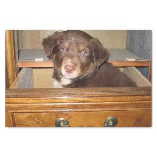 Papel De Seda filhote de cachorro de border collie no drawr