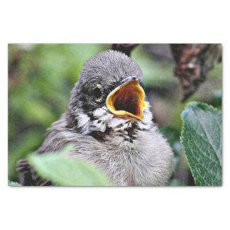 Papel De Seda pássaro bonito