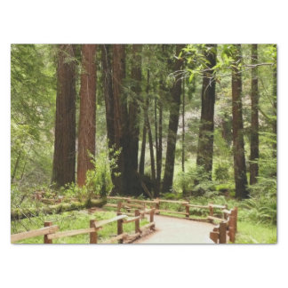 Papel De Seda Trajeto das madeiras de Muir mim