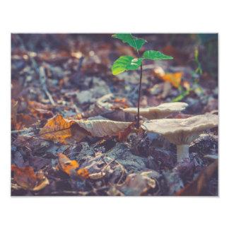 Papel profissional da foto do cogumelo da floresta impressão de foto