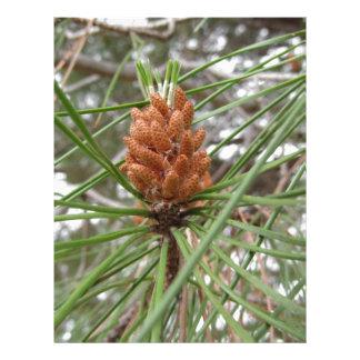Papel Timbrado Cones imaturos do homem ou do pólen do pinheiro