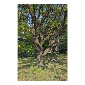 Papelaria Árvore na primavera
