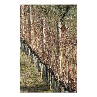 Papelaria Campo desencapado do vinhedo no inverno. Toscânia,