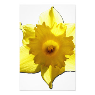 Papelaria Daffodil 1,0 da trombeta amarela