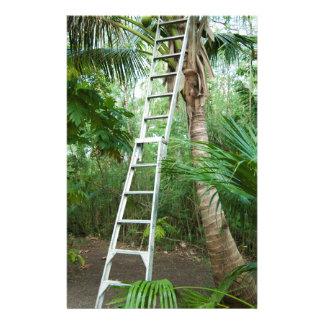 Papelaria Escolhendo cocos frescos