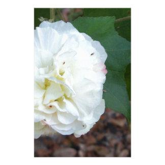 Papelaria flor branca dos mutabilis do hibiscus