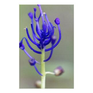 Papelaria Flor do jacinto de borla (comosum do Muscari)
