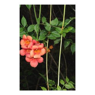 Papelaria Flores da meia-noite