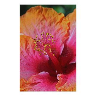 Papelaria Hibiscus