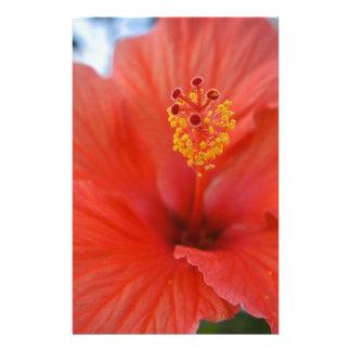 Papelaria Hibiscus vermelho