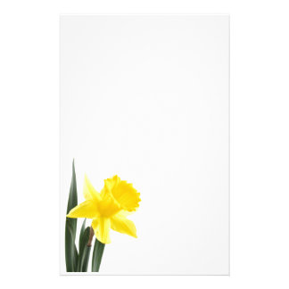 Papelaria Único Daffodil amarelo do narciso