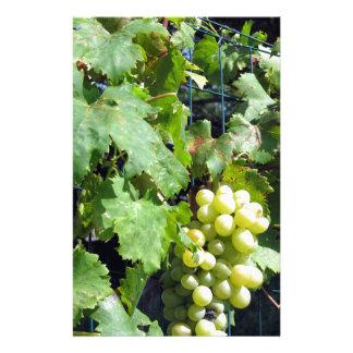 Papelaria Uvas brancas em um vinhedo
