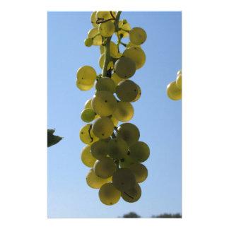Papelaria Uvas brancas na videira contra o céu azul