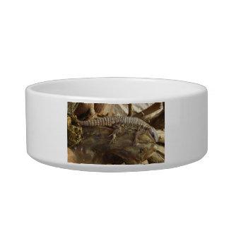 Para o leste lagarto cintado tropical tijela para gato