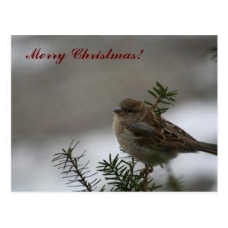 Pardal do Feliz Natal! Cartão Postal