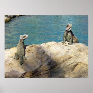 Pares de fotografia animal tropical das iguanas poster