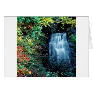 Parque da cachoeira cartões