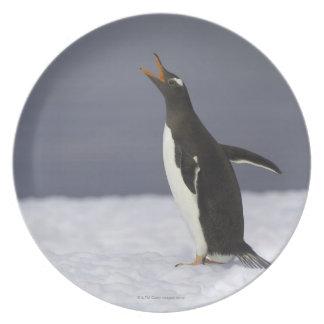 Pássaro adulto do pinguim de Gentoo (Pygoscelis pa Louças De Jantar