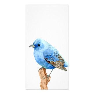 Pássaro azul pequeno cartoes com foto
