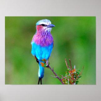 Pássaro colorido poster