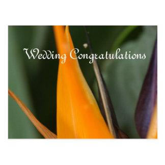 Pássaro de cartão dos parabéns do casamento do cartão postal