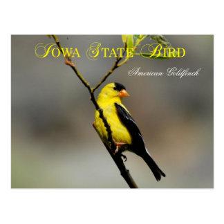 Pássaro de estado de Iowa - Goldfinch americano Cartão Postal