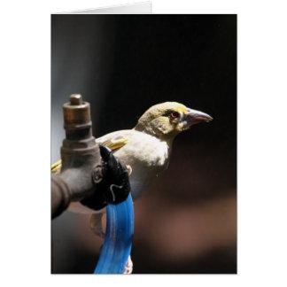 Pássaro do tecelão cartão