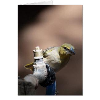 Pássaro do tecelão em uma torneira cartão