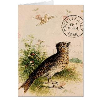 Pássaro do vintage, aniversário cartão