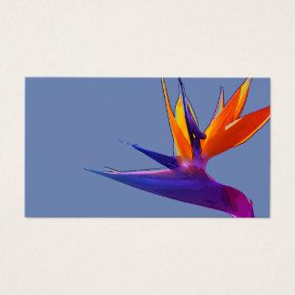 Pássaro roxo do cartão de visita do paraíso