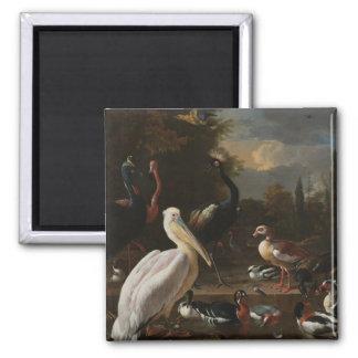 Pássaros das belas artes ímã quadrado