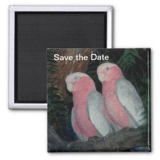 Pássaros do amor da imã salve a data ímã quadrado