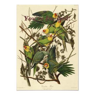 Pássaros do impressão do papagaio de Audubon Convite 11.30 X 15.87cm