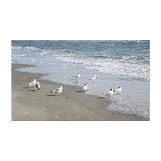 Pássaros na fotografia da arte das canvas da praia impressão de canvas esticada