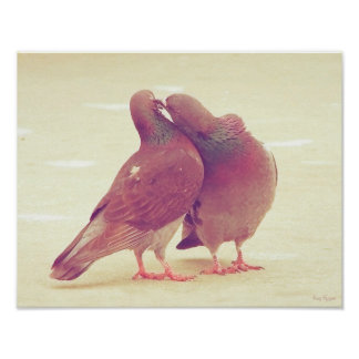 Pássaros retros do amor do pombo que beijam a foto poster