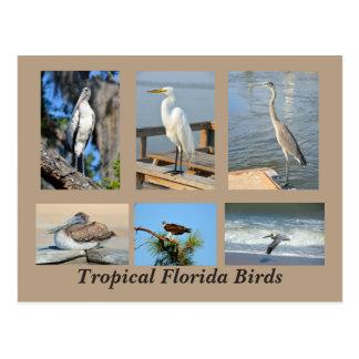 Pássaros tropicais de Florida Cartão Postal