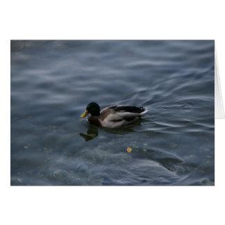 Pato no lago Como Cartão Comemorativo