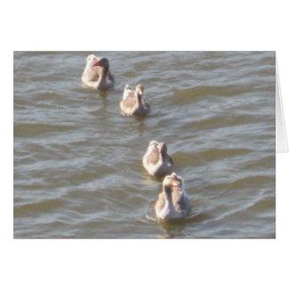 Patos em seguido cartão comemorativo