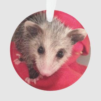 Paulee o O'Possum pequeno de Indiana do sul