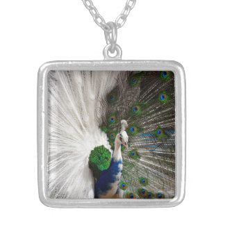 Pavão azul branco colar banhado a prata