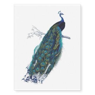 Pavão azul com as penas de cauda bonitas