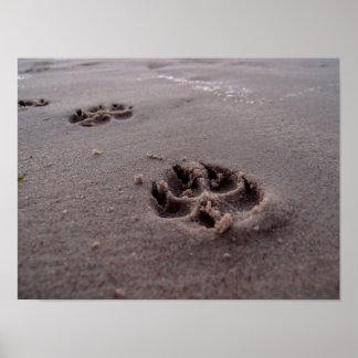 Pegadas animais poster