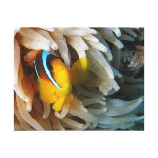 Peixes alaranjados do palhaço impressão em canvas