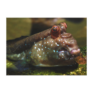 Peixes anfíbios Oxudercinae de Mudskipper Impressão Em Tela