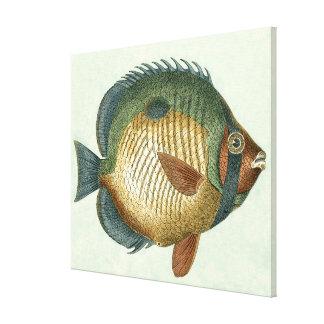 Peixes coloridos grandes
